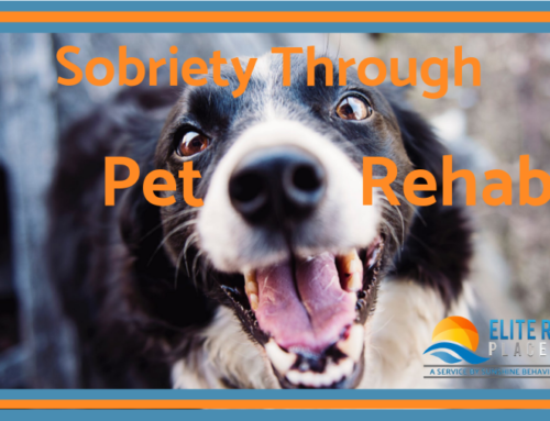 Addiction Recovery: Finding Sobriety Through Pet Rehabilitation